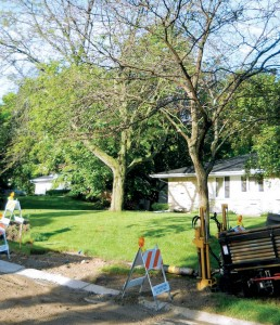 HDD left this lawn and mature tree intact. It also required less restoration afterward, compared to traditional trenched projects.