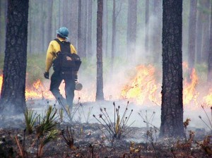 A crew member monitors a prescribed fire in Cherokee National Forest in Tennessee. (Photo provided)