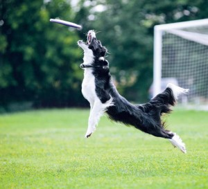 Most communities have such a large number of dog owners that adopting dog-friendly legislation