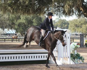 "Ocala hosts ""Horses in the Sun,"" a two-month dressage and jumper competition, which brings nearly $7 million into the county each year.(Photo provided by Ocala/Marion County Visitors and Convention Bureau)"