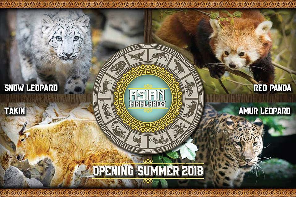 A sign of things to come at Cleveland Metroparks in 2018, the Asian Highlands will be a global destination area and home to a snow leopard, red pandas, takin and a Amur leopard, one of the most endangered big cats on earth. (Photo provided by Cleveland Metroparks/Kyle Lanzer)