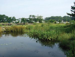 Natural coastal marshes provide erosion protection and coastal flooding benefits in addition to serving as a pollution buffer. Pictured is the Virginia Institute of Marine Science's Teaching Marsh. (Photo provided)