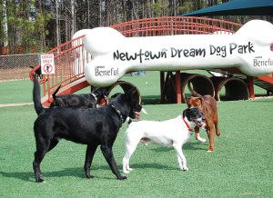 Dogs socialize at Newtown Dream Dog Park in Johns Creek, Ga. (Photo provided)