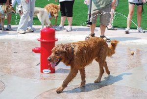 Water features can be an added bonus during summer months, cooling down canines at play. Pictured is Johns Creek's dog park. (Photo provided)