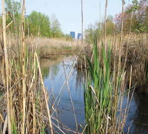 "This ""accidental wetland"" occurred naturally next to a turnpike in Jersey City, N.J. This is one of the accidental wetlands that Dr. Monica Palta, a professor in the School of Life Sciences at Arizona State University, has studied. (Photo provided)"