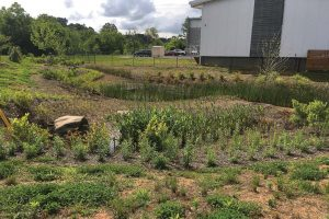 This created wetland on Craven Street in Asheville, N.C., was part of a public-private partnership with New Belgium Brewing. There's a nearby greenway where folks can walk and enjoy nature. (Photo provided)