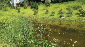 This is the created wetland in Albany, N.Y., in August 2017 — just six months after construction was completed and four months after plantings. Commissioner Joe Coffey remarked that already at this point the wetland looked as if it had always been there. (Photo provided)