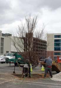 Louisville, Ky., urges other municipalities to move ahead with thoughtful designs on how to plant trees in parking lots. (Photo provided)