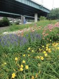 Pleasing plantings have been used along I-71 South in Cincinnati, Ohio. Plants are maintained by park staff. (Photo provided)