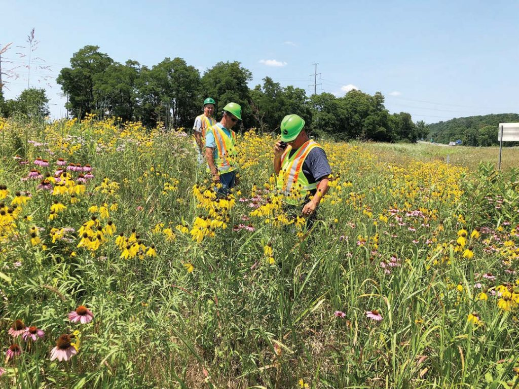 ODOT employees examine the health of the agency's pollinator habitat located in the state-owned right of way along state Route 207 in Ross County. (Photo provided)