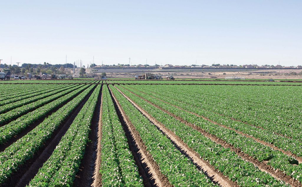 Agriculture is a big industry in Yuma and a majority of the people coming across the border are primarily serving in the agricultural industry as opposed to manufacturing or retail. (Shutterstock.com)