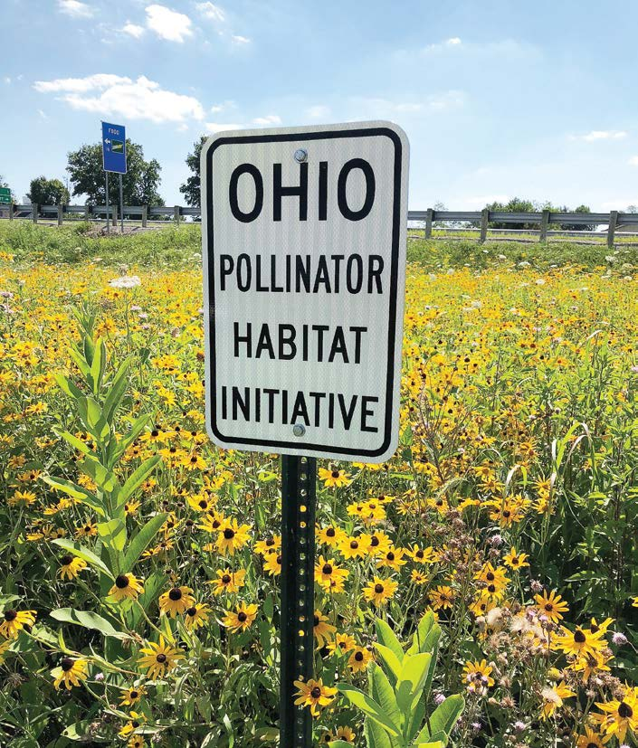 Milkweed is an important part of ODOT's pollinator habitat as the agency hopes to bolster monarch butterfly numbers. Ohioans can help by harvesting milkweed pods and leaving them at milkweed pod collection stations. (Photo provided)