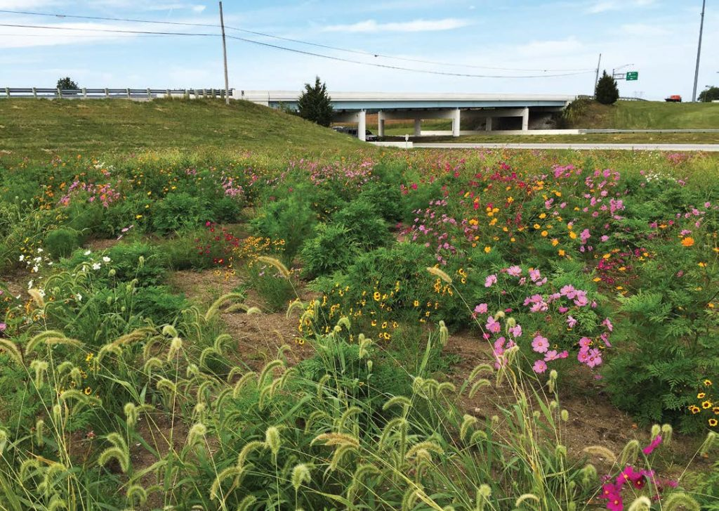 For its pollinator habitats, ODOT seeded a mixed variety of native prairie plant species, providing food specifi c for pollinators. This program has been well received by the public who enjoy seeing beautiful flowers while they drive. (Photo provided)