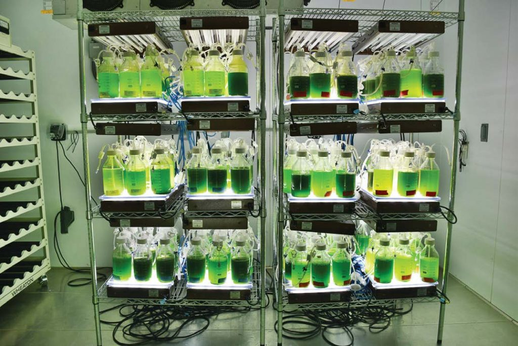 Pictured are algae samples at the University of Michigan. (Photo provided)